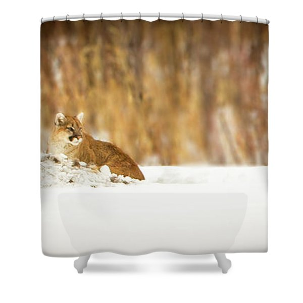 Rivers Treasure  Shower Curtain