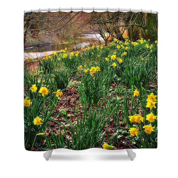 Riverside Daffodils In Spring Shower Curtain