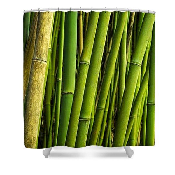 Road To Hana Bamboo Panorama - Maui Hawaii Shower Curtain