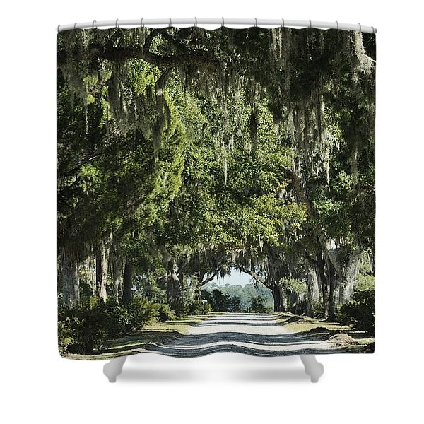 Road With Live Oaks Shower Curtain