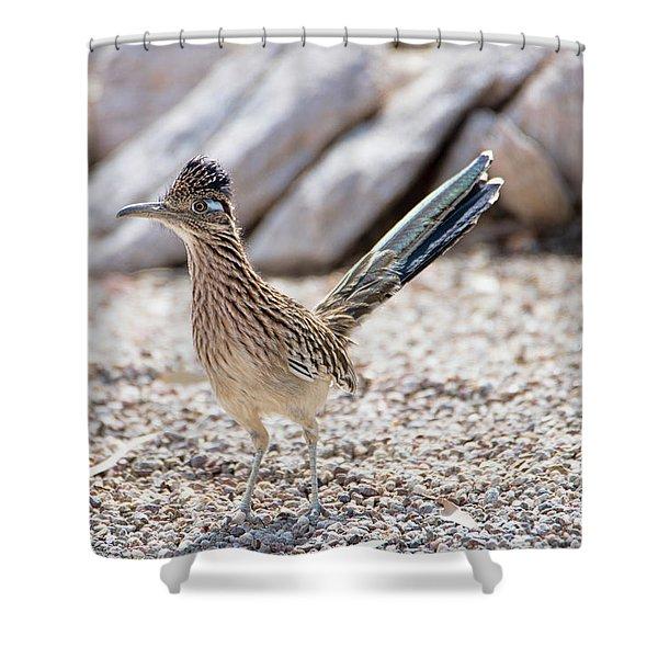 Roadrunner Hunting Shower Curtain