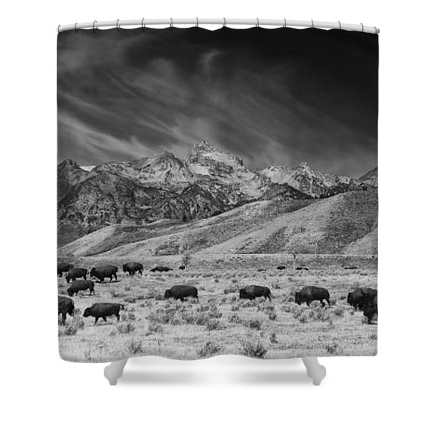 Roaming Bison In Black And White Shower Curtain