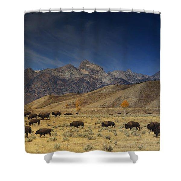 Roaming Bison Shower Curtain
