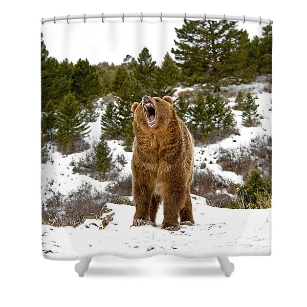 Roaring Grizzly In Winter Shower Curtain
