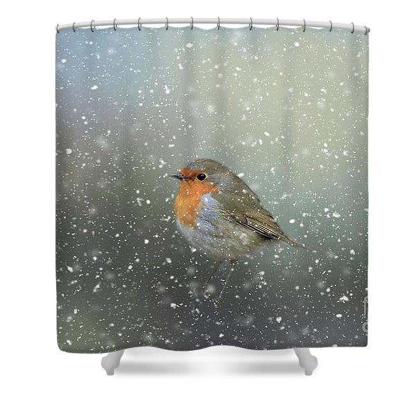 Robin In Winter Shower Curtain