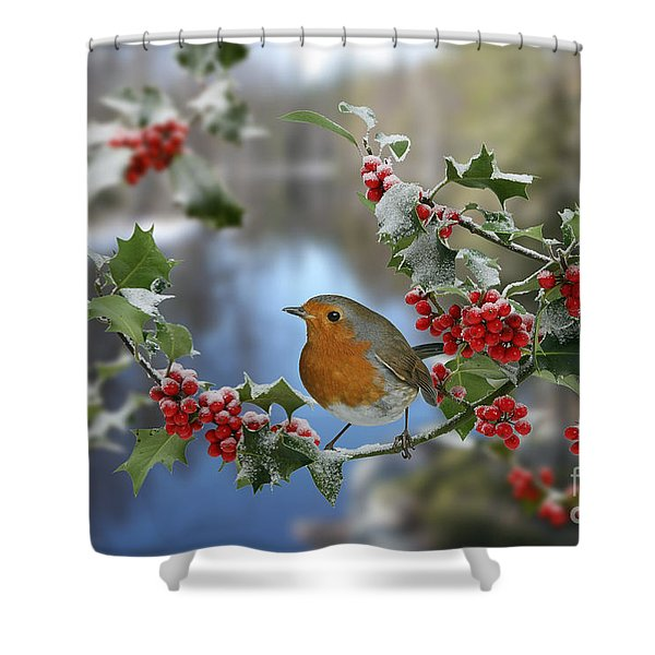 Robin On Holly Branch Shower Curtain