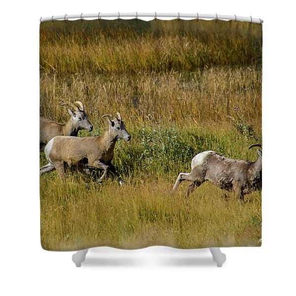 Rocky Mountain Goats 7410 Shower Curtain