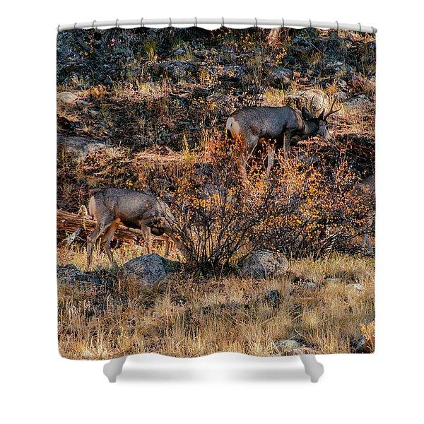 Rocky Mountain National Park Deer Colorado Shower Curtain