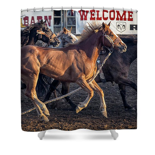 Rodeo Horses Shower Curtain