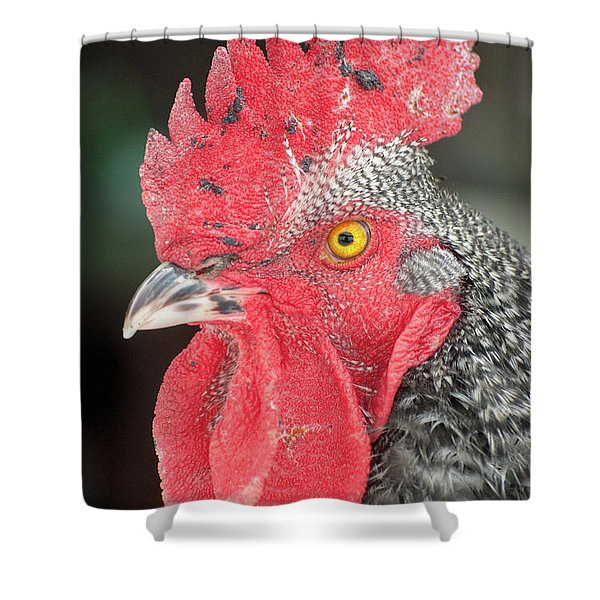 Rooster Named Brute Shower Curtain
