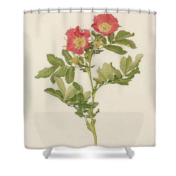 Rosa Pratincola Shower Curtain