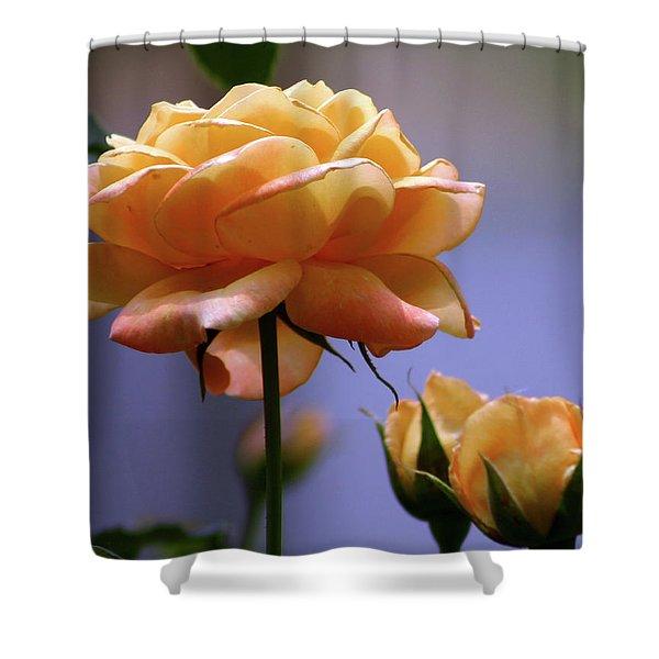 Rose 1156 H_2 Shower Curtain