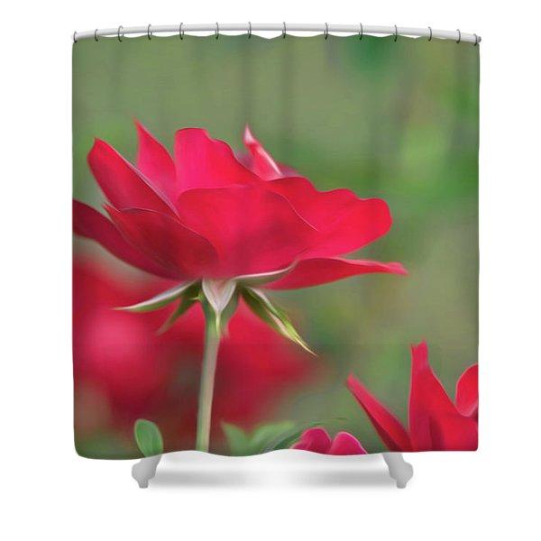 Rose 4 Shower Curtain