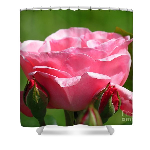 Rose And Buds Shower Curtain