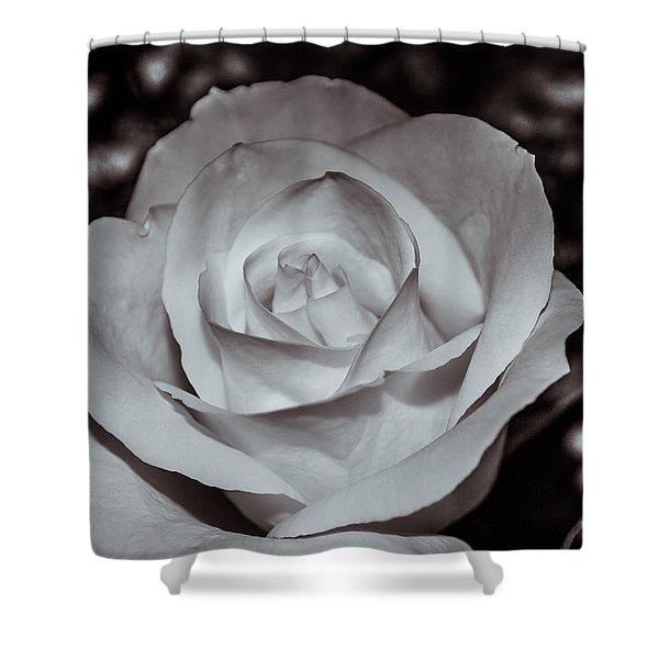 Rose B/w - 9166 Shower Curtain