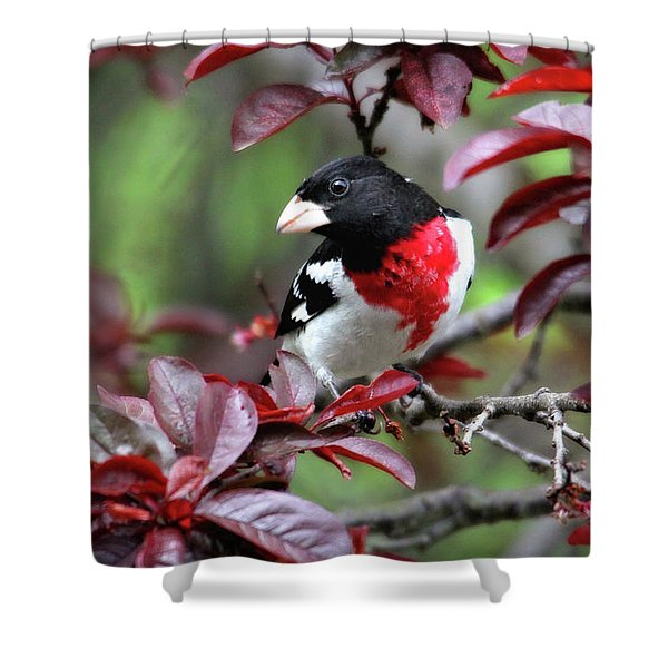 Rose-breasted Grosbeak Shower Curtain