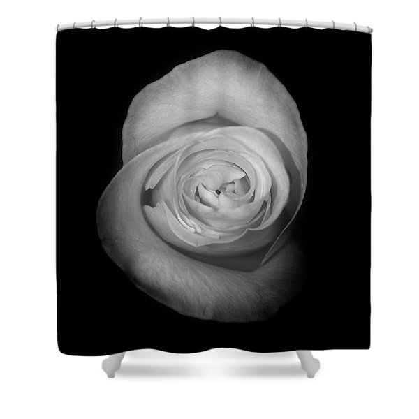 Rose From The Shadows Shower Curtain