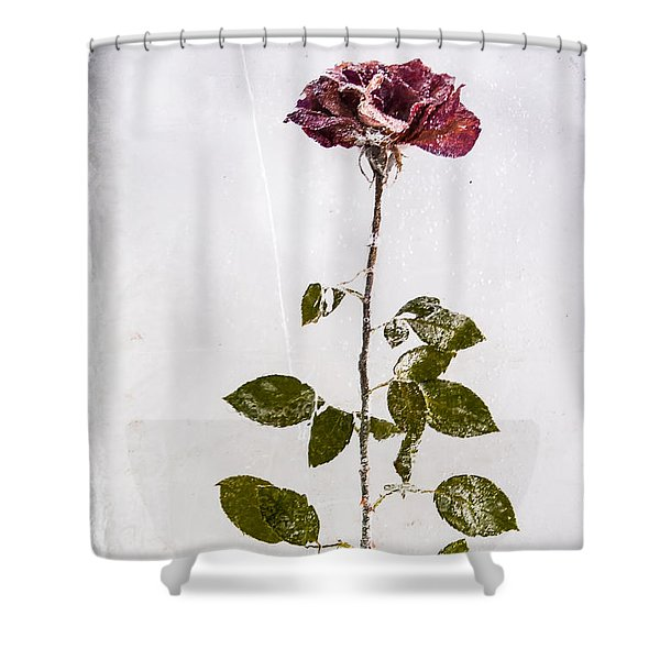 Rose Frozen Inside Ice Shower Curtain