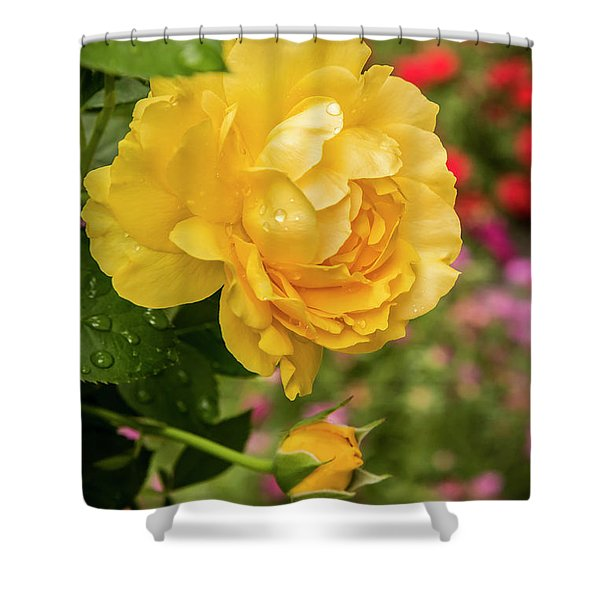 Rose, Julia Child Shower Curtain