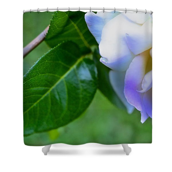 Rose Pedals Shower Curtain