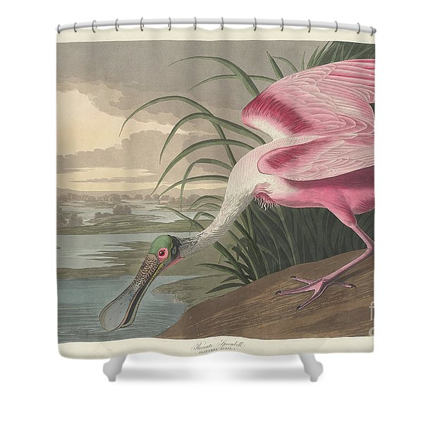 Roseate Spoonbill, 1836  Shower Curtain