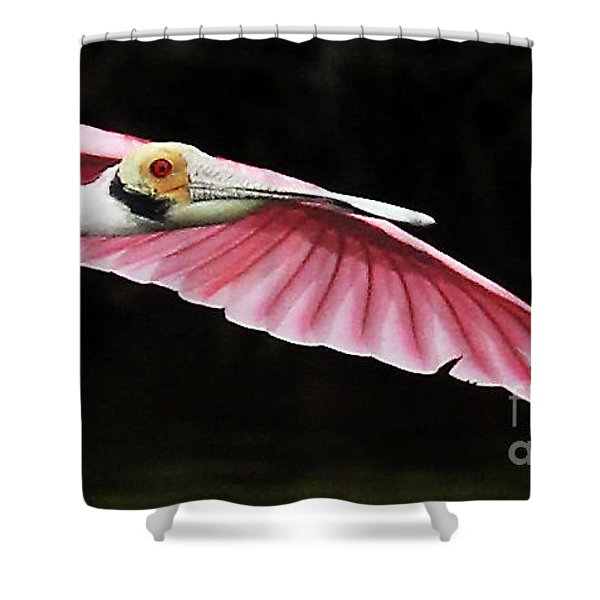 Roseate Spoonbill In Flight Shower Curtain