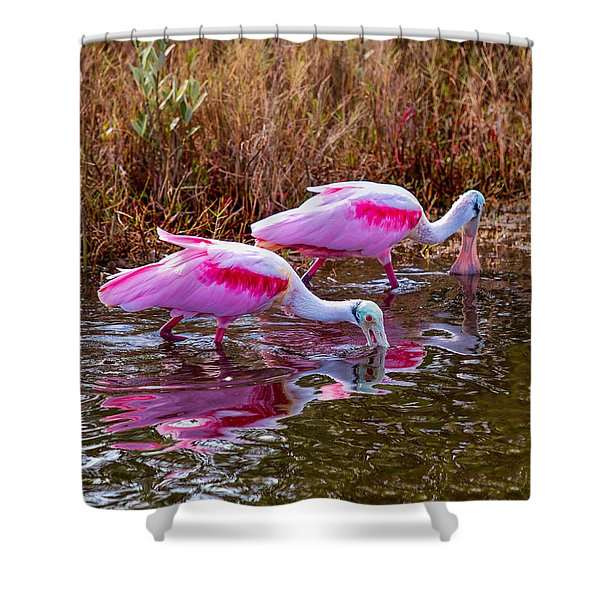 Roseate Spoonbills Swishing For Food Shower Curtain