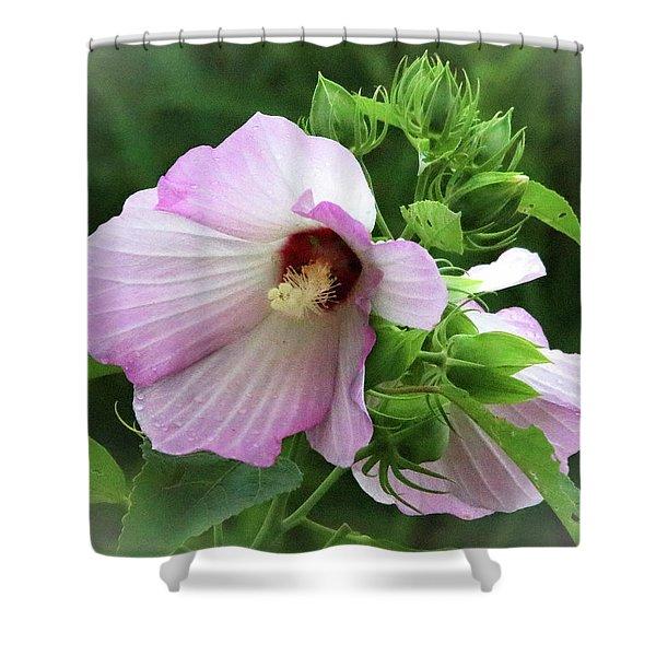 Rosemallow Shower Curtain