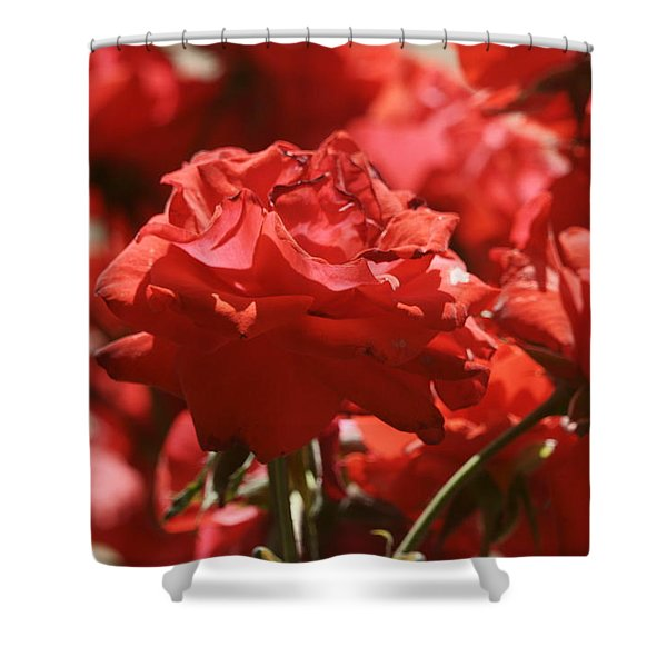 Roses 3 Shower Curtain