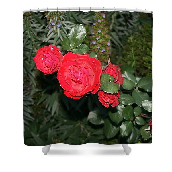 Roses Among Shower Curtain