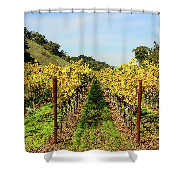 Rows Of Grapevines In Napa Valley California Shower Curtain