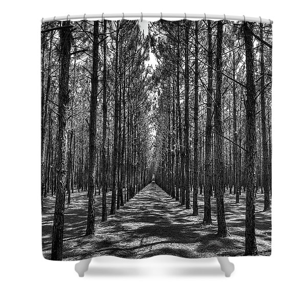Rows Of Pines Vertical Shower Curtain