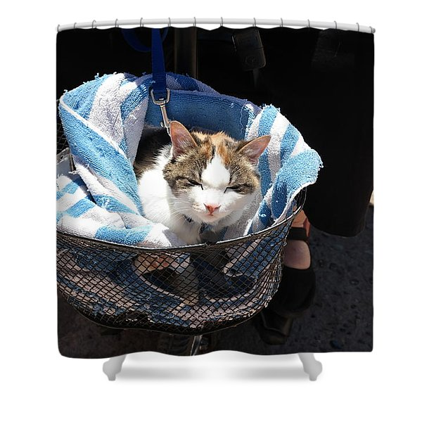 Royal Carriage Shower Curtain