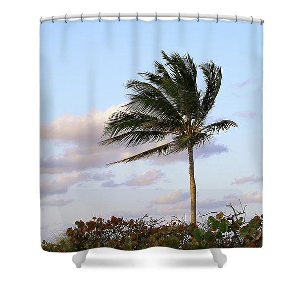 Royal Palm Tree Shower Curtain