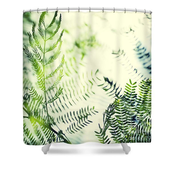 Royal Poinciana Tree Leaves - Hipster Photo Square Shower Curtain