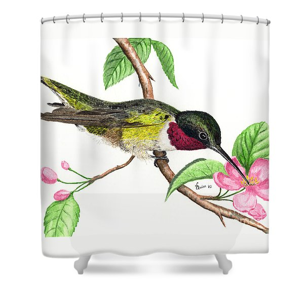 Ruby-throated Hummingbird Shower Curtain