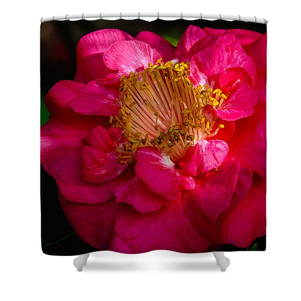 Ruffles Of Pink  Shower Curtain