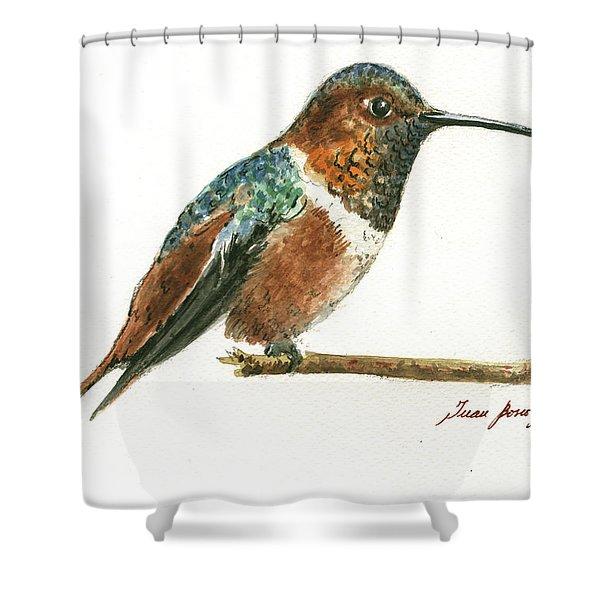 Rufous Hummingbird Watercolor Shower Curtain