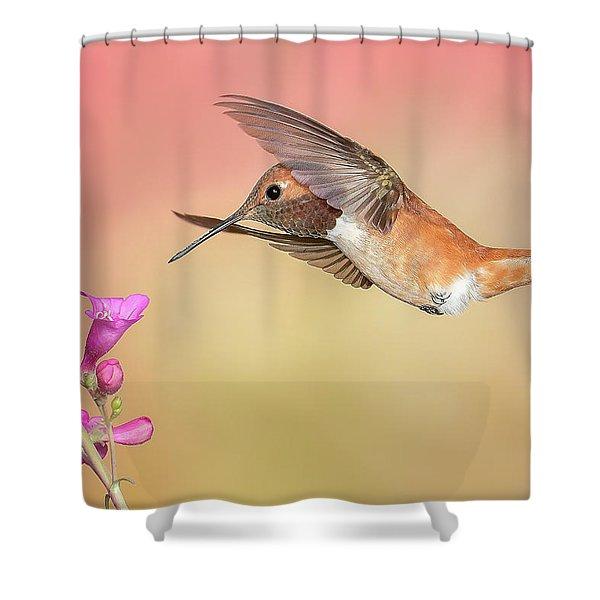 Rufous Hummingbird With Penstemon Shower Curtain