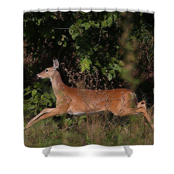 Running Deer Shower Curtain