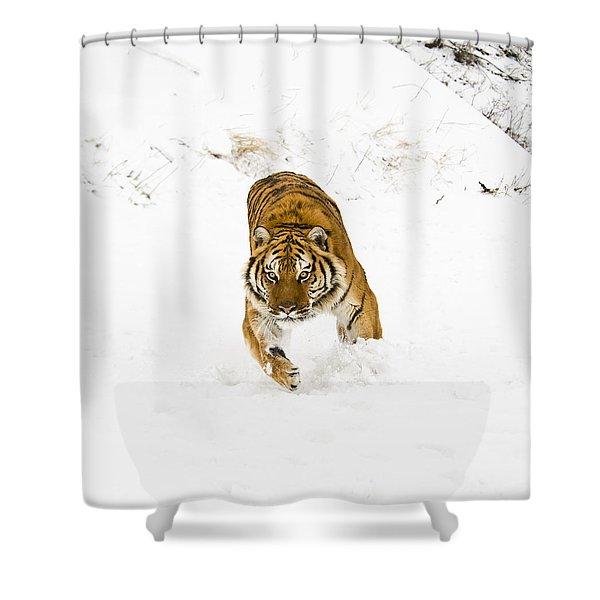 Running Tiger Shower Curtain