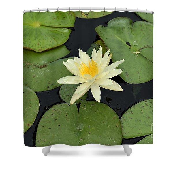 Sacred Lotus Shower Curtain