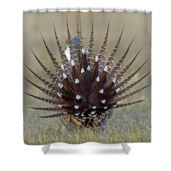 Sage-grouse Tail Fan Shower Curtain