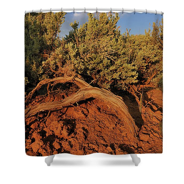 Sagebrush At Sunset Shower Curtain