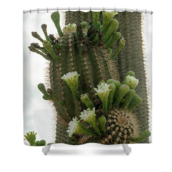 Saguaro Buds And Blooms Shower Curtain