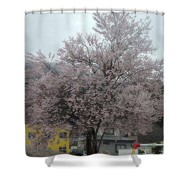 Sakura, Japan's Ephemeral Also Beautiful Flowers Shower Curtain