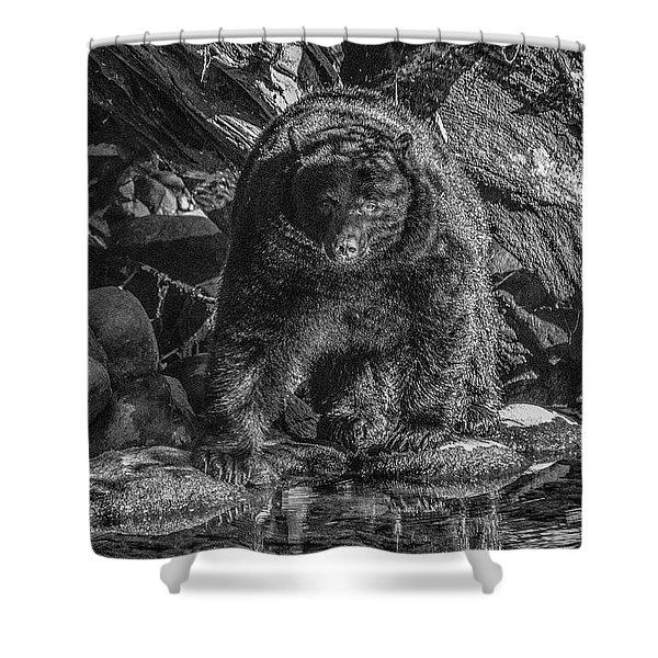 Salmon Seeker Black Bear  Shower Curtain