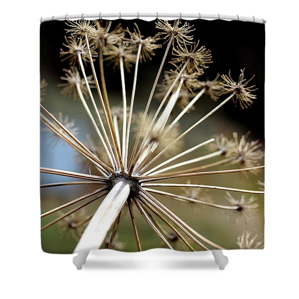 Salsify Stems Shower Curtain