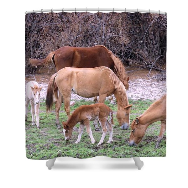 Salt River Wild Horses In Winter Shower Curtain