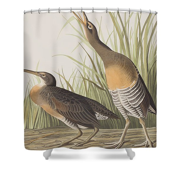 Salt Water Marsh Hen Shower Curtain